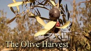 the-olive-harvest.jpg