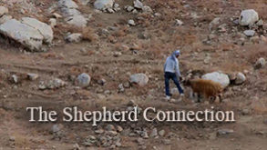 the-shepherd-connection.jpg
